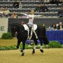 2010 Alltech FEI World Equestrian Games
